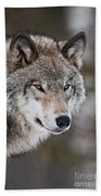 Timber Wolf Pictures 1067 Beach Towel