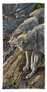 Timber Wolf Pictures 1094 Beach Towel
