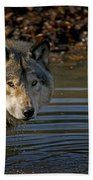 Timber Wolf Pictures 1103 Beach Towel