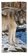 Timber Wolf Pictures 1175 Beach Towel