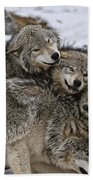 Timber Wolf Pictures 120 Beach Towel