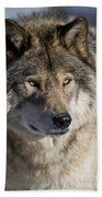 Timber Wolf Pictures 1218 Beach Towel