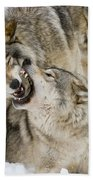 Timber Wolf Pictures 1314 Beach Towel