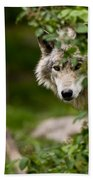 Timber Wolf Pictures 1328 Beach Towel