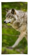 Timber Wolf Pictures 1329 Beach Towel