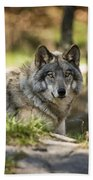 Timber Wolf Pictures 1363 Beach Towel