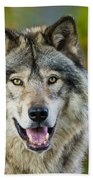 Timber Wolf Pictures 1388 Beach Towel