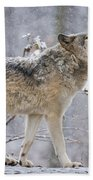 Timber Wolf Pictures 1401 Beach Towel