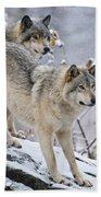 Timber Wolf Pictures 1417 Beach Towel