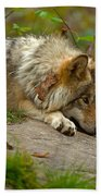 Timber Wolf Pictures 1646 Beach Towel