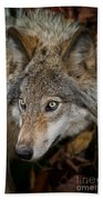 Timber Wolf Pictures 1660 Beach Towel