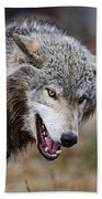 Timber Wolf Pictures 173 Beach Towel