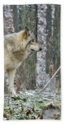 Timber Wolf Pictures 185 Beach Towel
