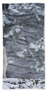 Timber Wolf Pictures 189 Beach Towel