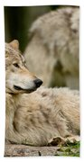 Timber Wolf Pictures 192 Beach Towel