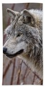 Timber Wolf Pictures 197 Beach Towel