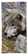Timber Wolf Pictures 205 Beach Towel