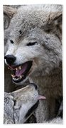 Timber Wolf Pictures 210 Beach Towel