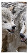 Timber Wolf Pictures 213 Beach Towel
