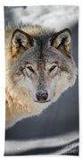 Timber Wolf Pictures 260 Beach Towel