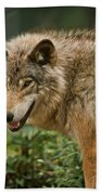 Timber Wolf Pictures 262 Beach Towel