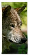 Timber Wolf Pictures 263 Beach Towel