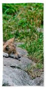 Timber Wolf Pictures 329 Beach Towel