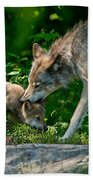 Timber Wolf Pictures 332 Beach Towel