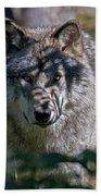 Timber Wolf Pictures 405 Beach Towel