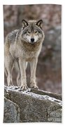 Timber Wolf Pictures 495 Beach Towel