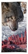 Timber Wolf Pictures 552 Beach Towel