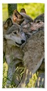 Timber Wolf Pictures 61 Beach Towel