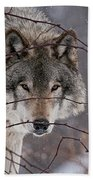 Timber Wolf Pictures 620 Beach Towel