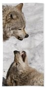 Timber Wolf Pictures 775 Beach Towel
