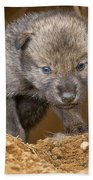 Timber Wolf Pictures 782 Beach Towel