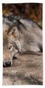 Timber Wolf Pictures 945 Beach Towel