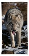 Timber Wolf Pictures 954 Beach Towel
