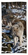 Timber Wolf Pictures 957 Beach Towel by World Wildlife Photography