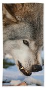 Timber Wolf Pictures 985 Beach Towel