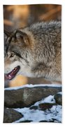Timber Wolf Pictures 991 Beach Towel