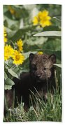 Timber Wolf Pups And Flowers North Beach Towel