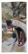 Timber Wolves Play Beach Towel