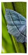 Tiny Moth On A Blade Of Grass Beach Towel by Bob Orsillo