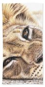 Tired Young Lion Beach Towel
