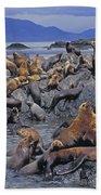 Tk0440, Thomas Kitchin Steller Sea Beach Towel
