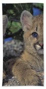 Tk0615, Thomas Kitchin Cougarmountain Beach Towel