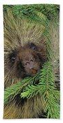 T.kitchin 14107c, Porcupine In Spruce Beach Towel