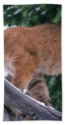 T.kitchin 15274d, Cougar Kitten Beach Towel