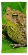 Toad Sitting Beach Towel