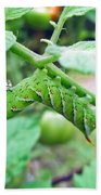 Tobacco Hornworm - Manduca Sexta - Six Spotted Hawkmoth Beach Towel